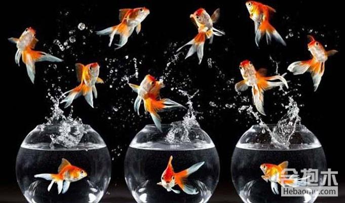 甩掉水逆马上转运?不妨养一缸鱼吧