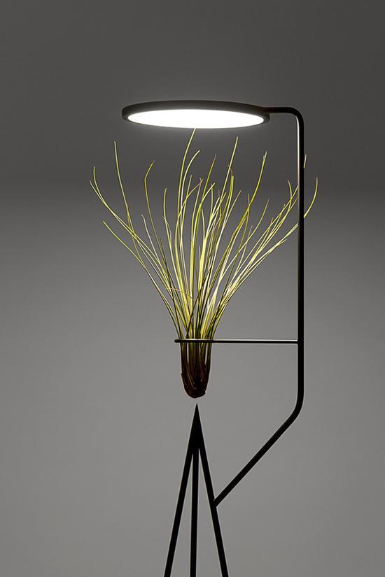 活力绿植灯饰 传递生命能量