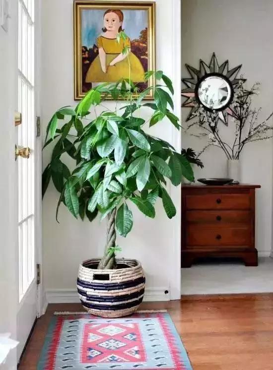 大型家居植物
