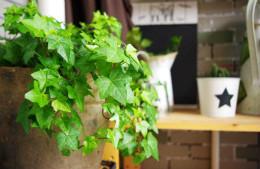 合抱木家居资讯-植物摆对了,财运就会滚滚来