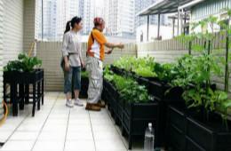 合抱木装修学堂-阳台上可以种什么菜?菜园式阳台如何装修设计?